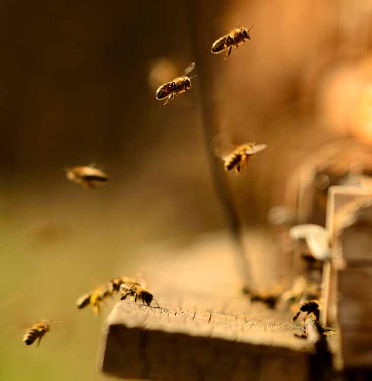 bee and wasp control adelaide